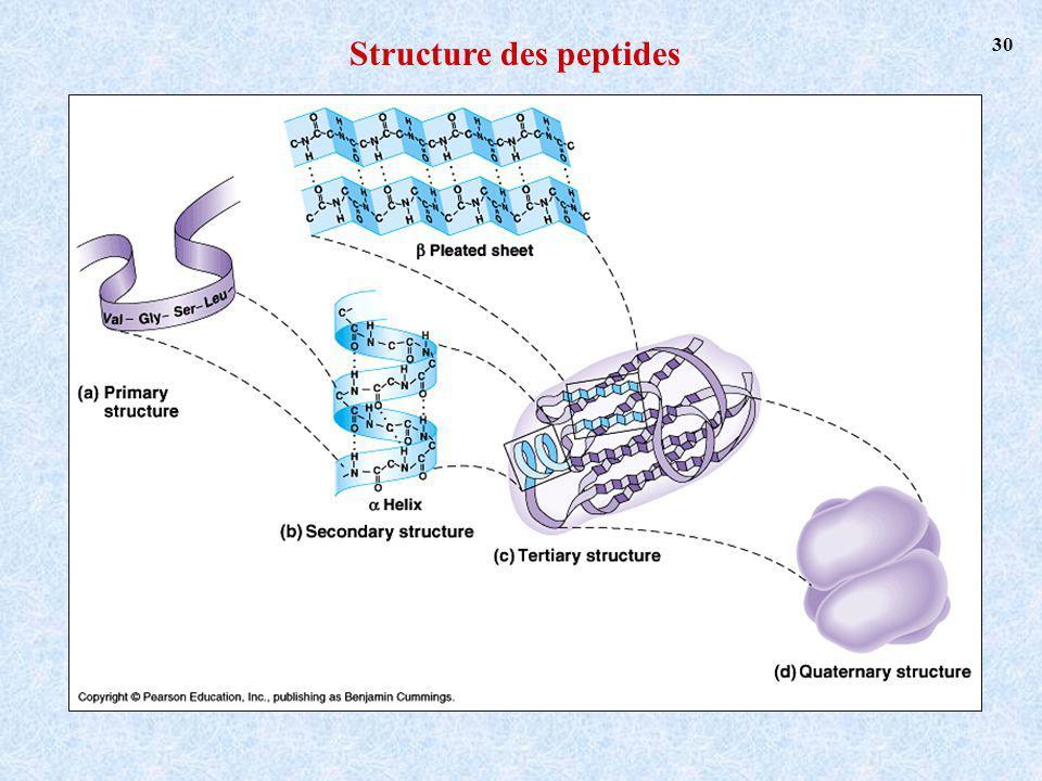 Structure des peptides 30