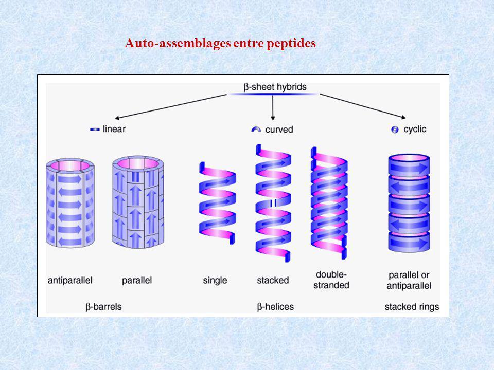 Auto-assemblages entre peptides