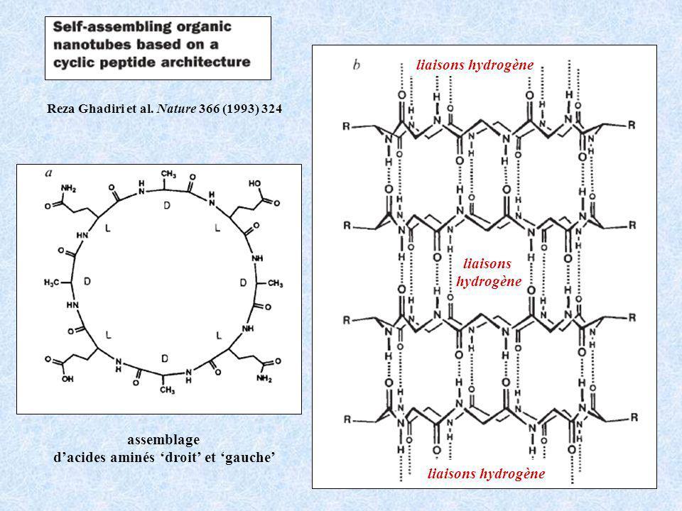 assemblage dacides aminés droit et gauche liaisons hydrogène liaisons hydrogène Reza Ghadiri et al.