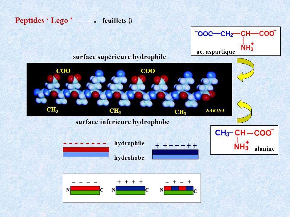 Peptides Lego alanine surface supérieure hydrophile surface inférieure hydrophobe CH 3 COO - CH 3 COO - EAK16-I - - - - + + + + + + + hydrohobe hydrophile feuillets ac.