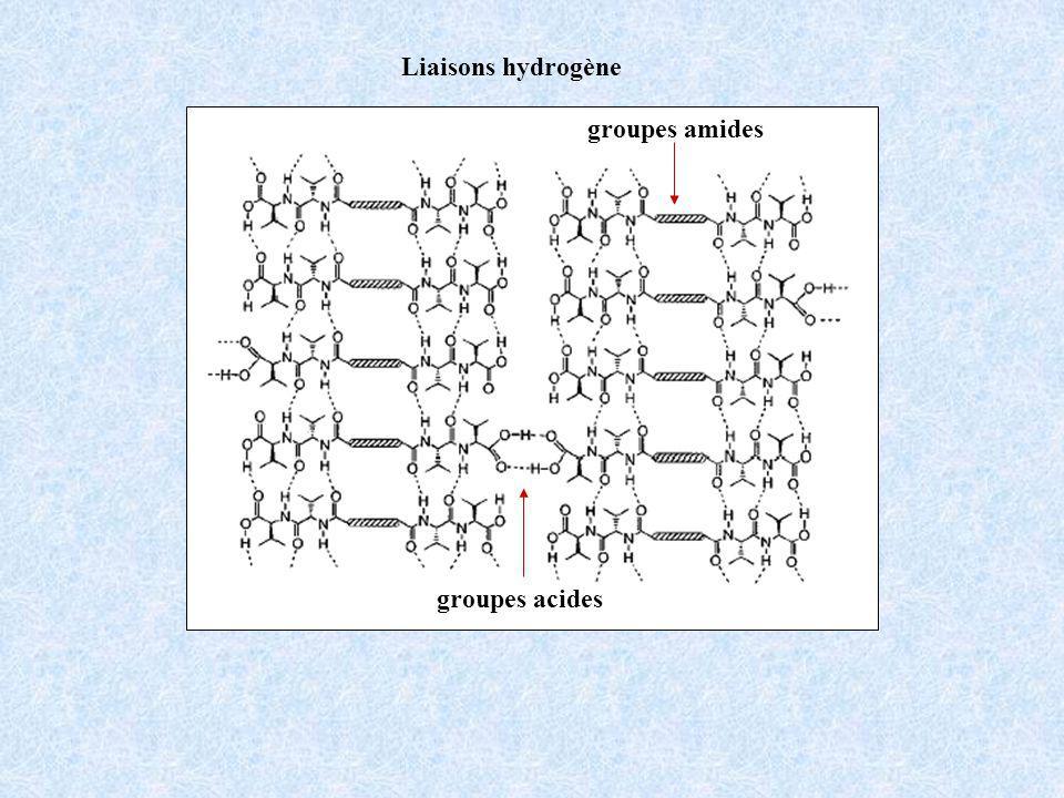Liaisons hydrogène groupes acides groupes amides
