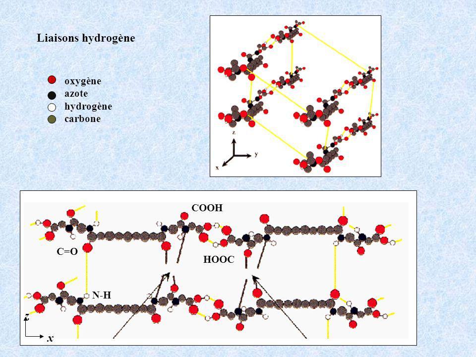 oxygène azote hydrogène carbone x z N-H C=O COOH HOOC Liaisons hydrogène