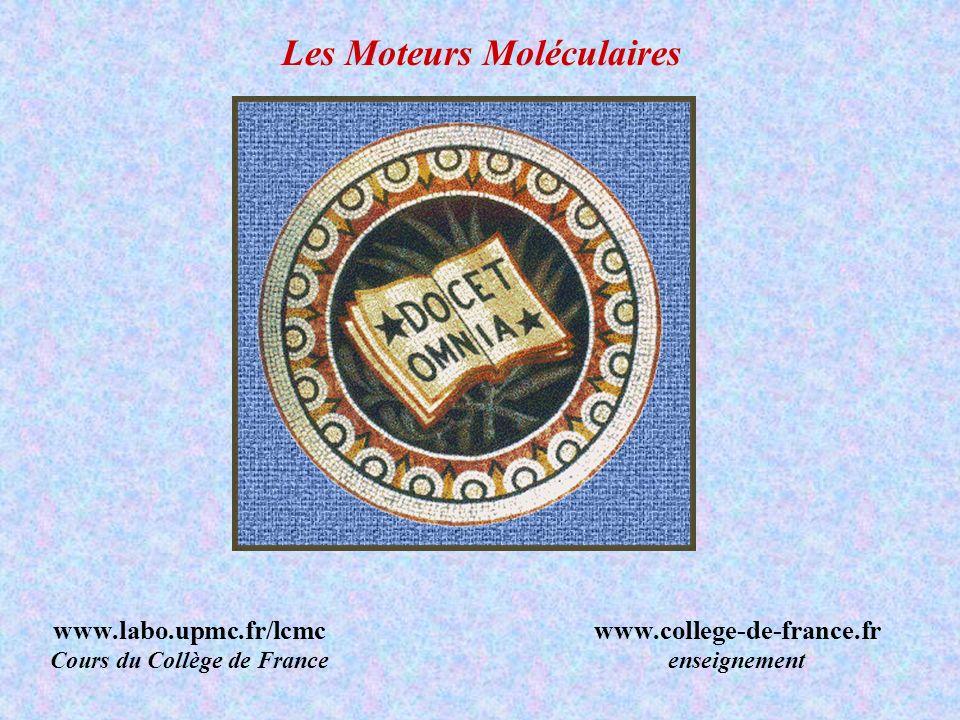 Les Moteurs Moléculaires www.labo.upmc.fr/lcmc Cours du Collège de France www.college-de-france.fr enseignement