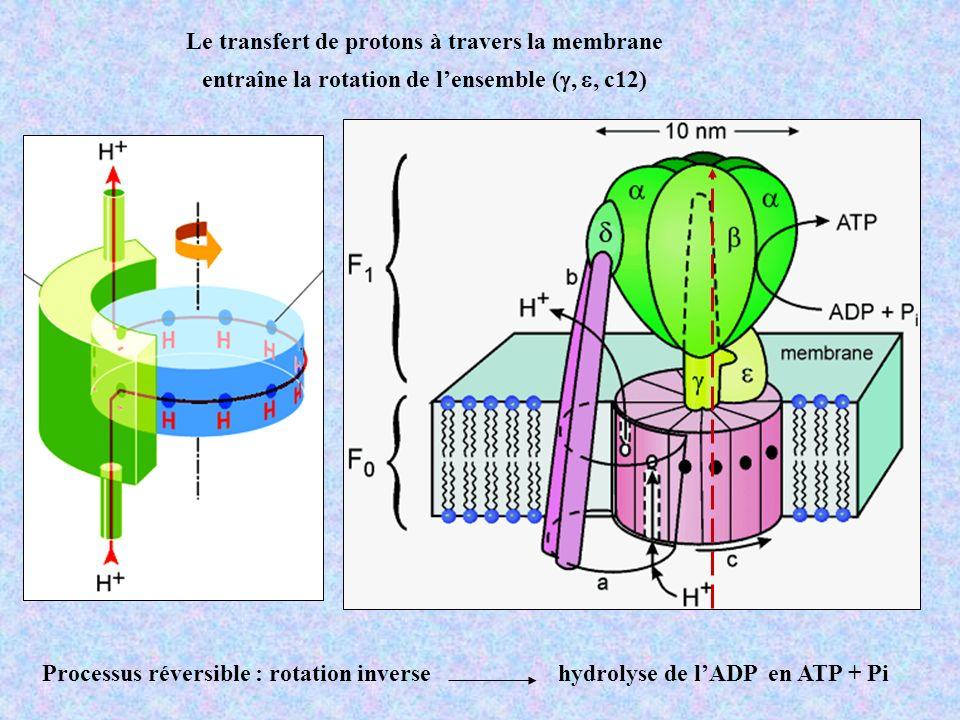 TTF Réactions redox TTF est facilement oxydable