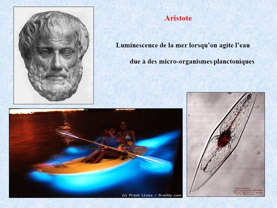 Aristote Luminescence de la mer lorsquon agite leau due à des micro-organismes planctoniques