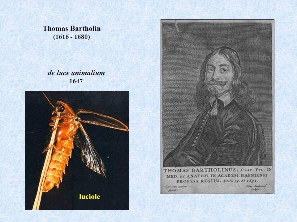 Thomas Bartholin (1616 - 1680) de luce animalium 1647 luciole