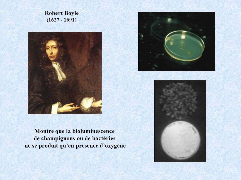 Robert Boyle (1627 - 1691) Montre que la bioluminescence de champignons ou de bactéries ne se produit quen présence doxygène
