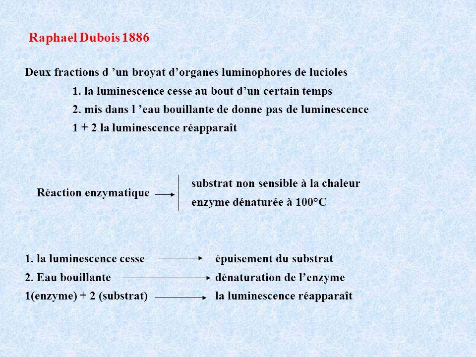 Raphael Dubois 1886 Deux fractions d un broyat dorganes luminophores de lucioles 1.