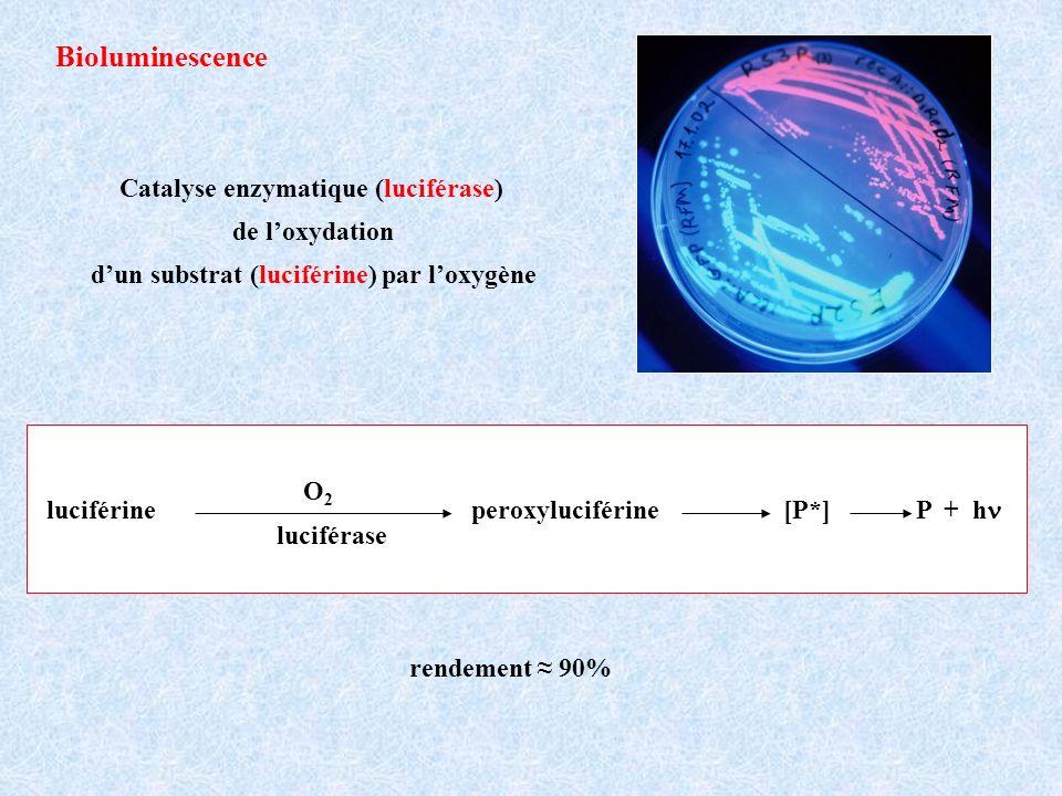 Bioluminescence luciférine peroxyluciférine [P*] P + h luciférase O2O2 Catalyse enzymatique (luciférase) de loxydation dun substrat (luciférine) par loxygène rendement 90%