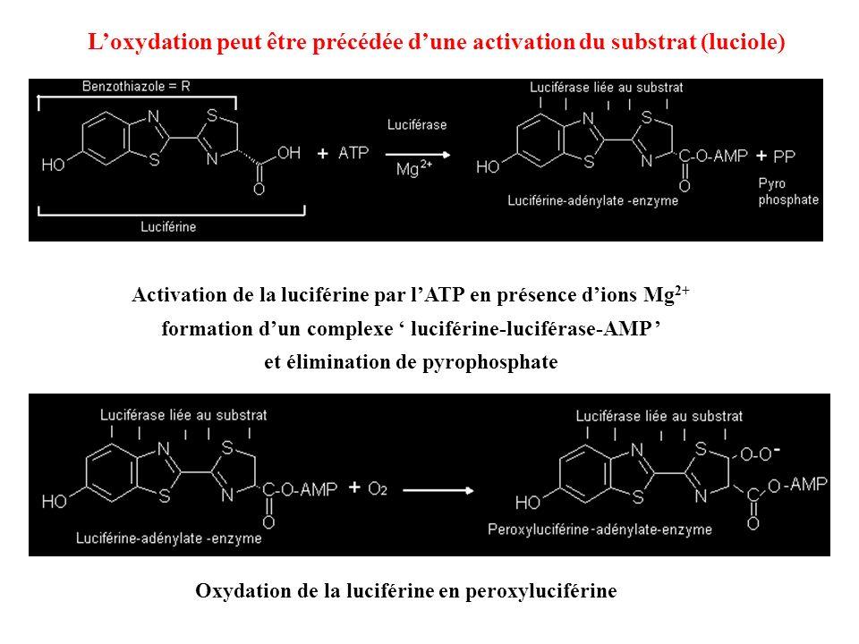relaxation du complexe activé avec émission de photons cyclisation du peroxyde puis décarboxylation