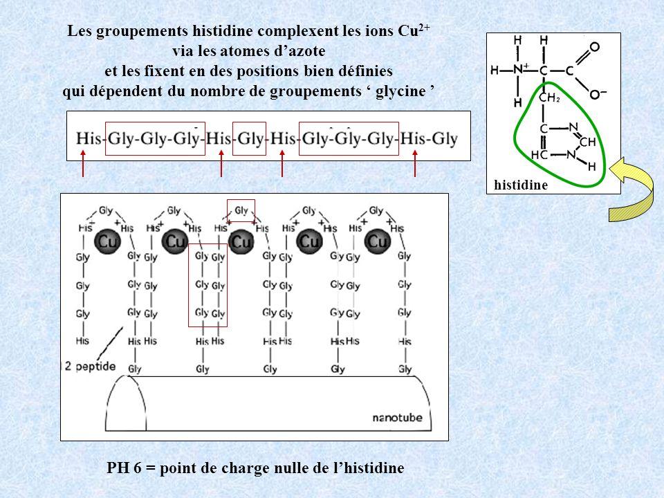 Les groupements histidine complexent les ions Cu 2+ via les atomes dazote et les fixent en des positions bien définies qui dépendent du nombre de groupements glycine histidine PH 6 = point de charge nulle de lhistidine