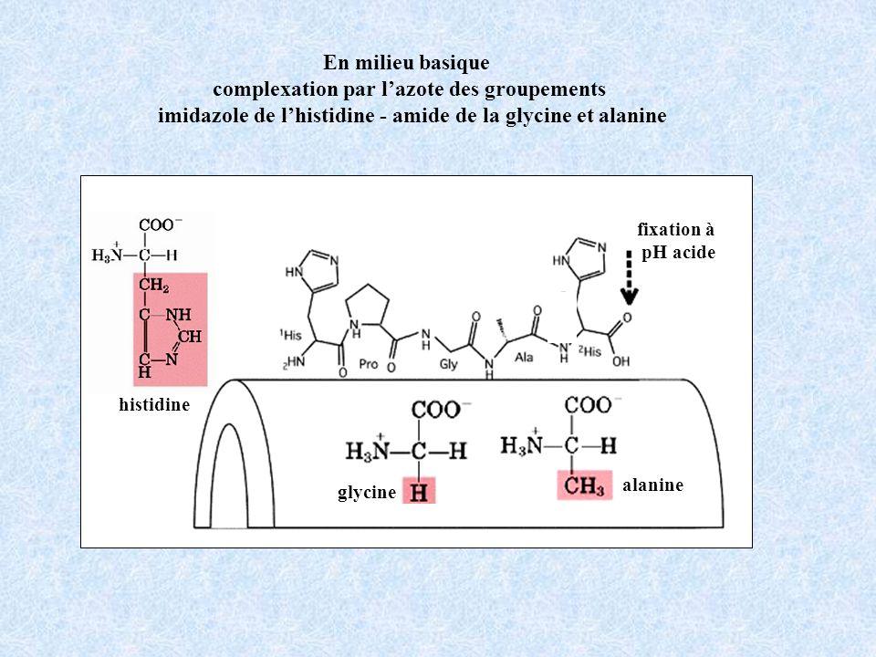 En milieu basique complexation par lazote des groupements imidazole de lhistidine - amide de la glycine et alanine fixation à pH acide alanine glycine histidine