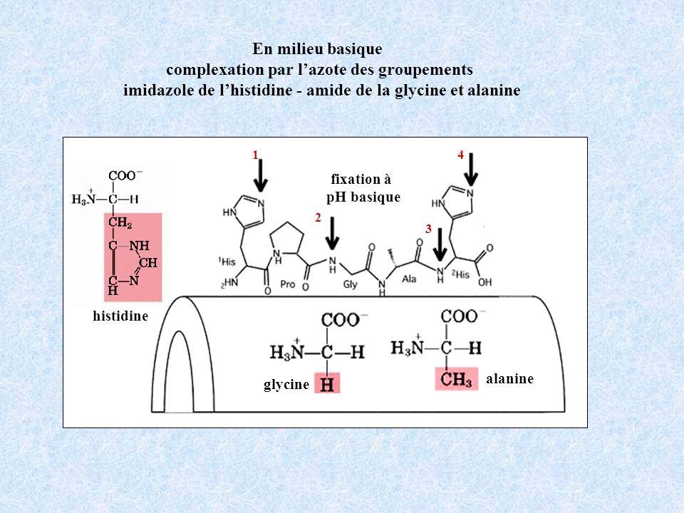 En milieu basique complexation par lazote des groupements imidazole de lhistidine - amide de la glycine et alanine fixation à pH basique alanine glycine histidine 1 2 3 4