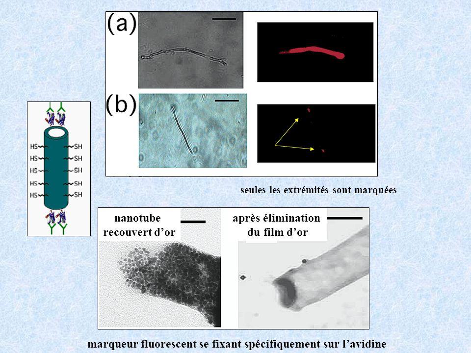marqueur fluorescent se fixant spécifiquement sur lavidine nanotube recouvert dor seules les extrémités sont marquées après élimination du film dor