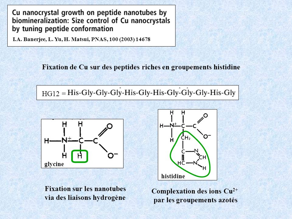glycineprolinehistidinealaninehistidine