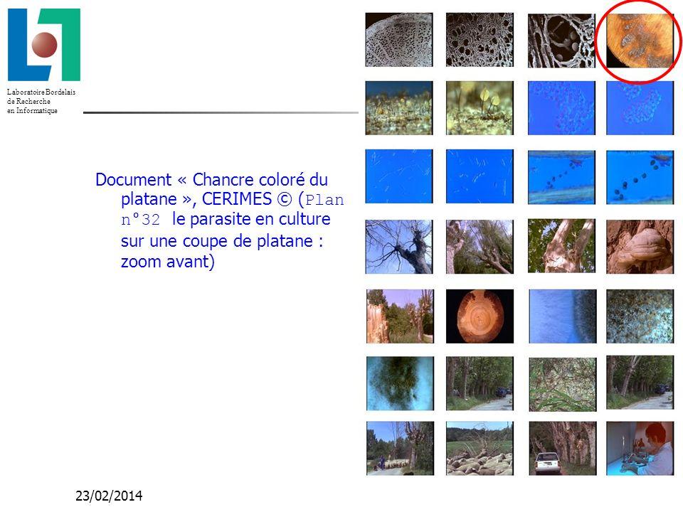 Laboratoire Bordelais de Recherche en Informatique 23/02/2014 Document « Chancre coloré du platane », CERIMES © ( Plan n°32 le parasite en culture sur une coupe de platane : zoom avant)