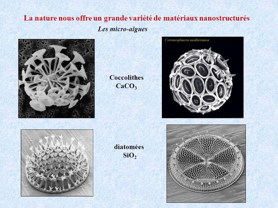 La nature nous offre un grande variété de matériaux nanostructurés Les micro-algues diatomées SiO 2 Coccolithes CaCO 3