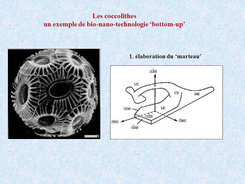 Les coccolithes un exemple de bio-nano-technologie bottom-up 1. élaboration du marteau