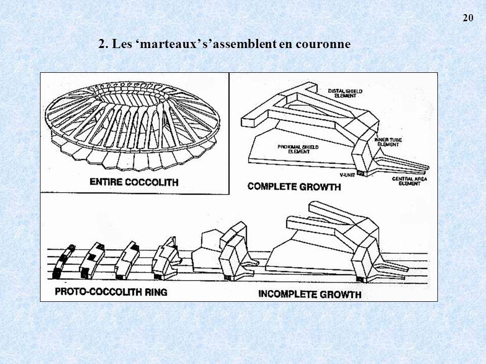 2. Les marteaux sassemblent en couronne 20