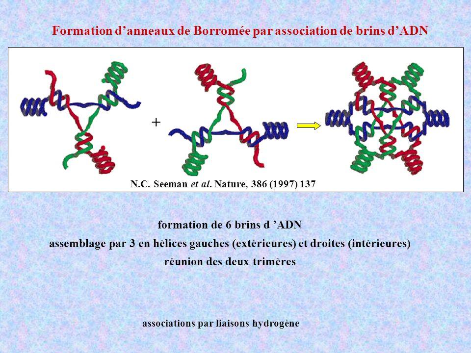 + N.C. Seeman et al. Nature, 386 (1997) 137 formation de 6 brins d ADN assemblage par 3 en hélices gauches (extérieures) et droites (intérieures) réun