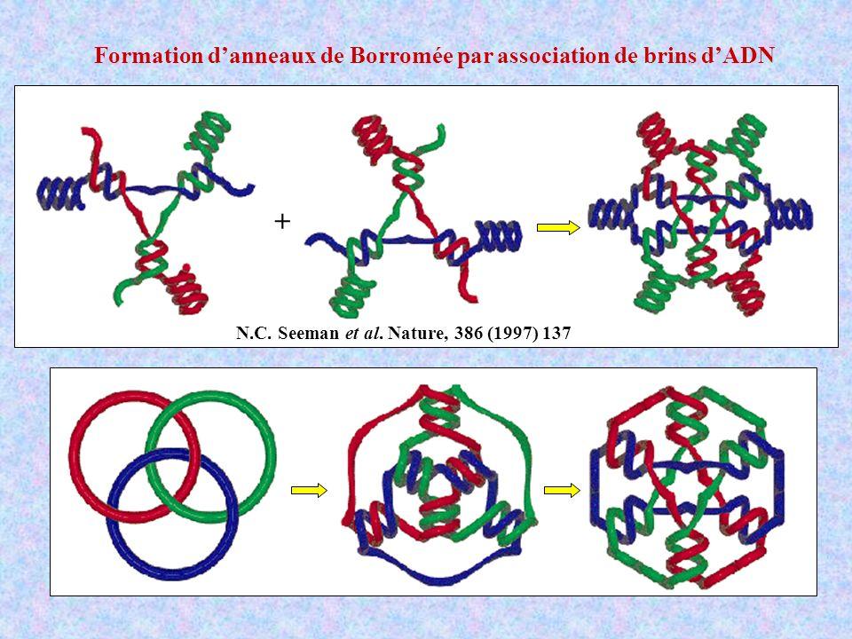 + N.C. Seeman et al. Nature, 386 (1997) 137 Formation danneaux de Borromée par association de brins dADN