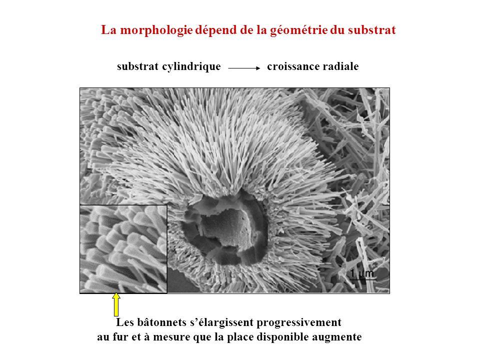 La morphologie dépend de la géométrie du substrat Les bâtonnets sélargissent progressivement au fur et à mesure que la place disponible augmente subst