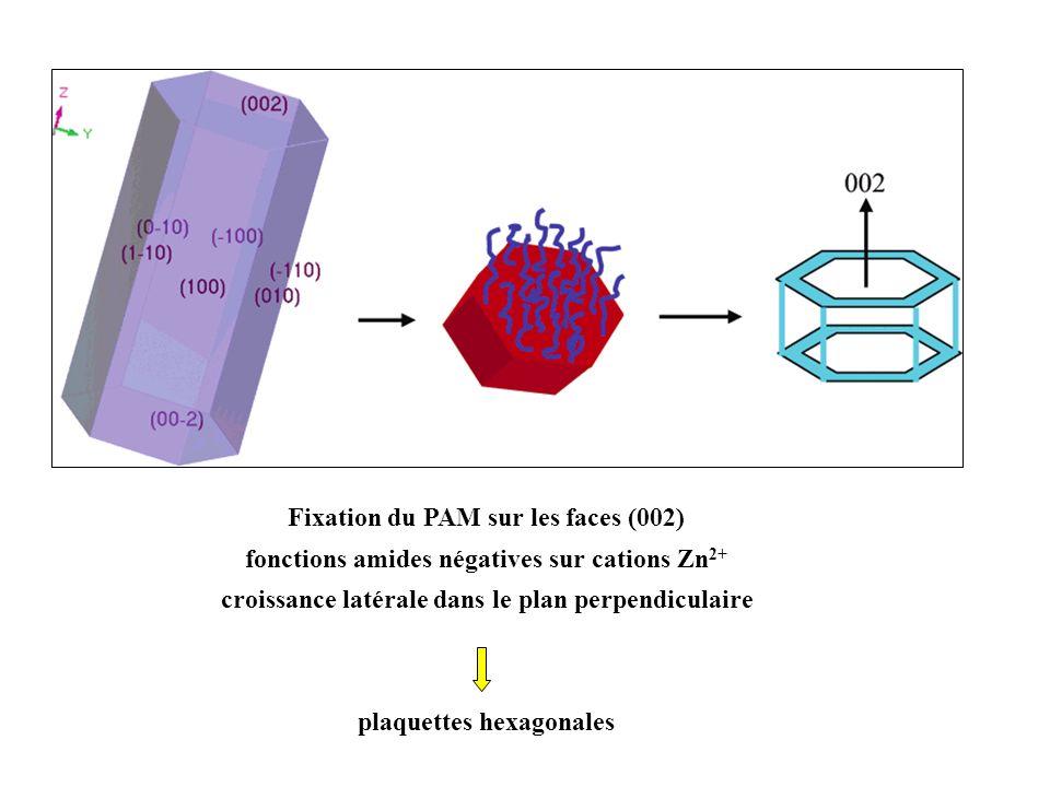Fixation du PAM sur les faces (002) fonctions amides négatives sur cations Zn 2+ croissance latérale dans le plan perpendiculaire plaquettes hexagonal