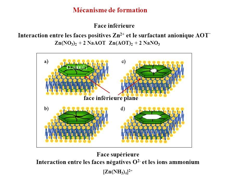 Face inférieure Interaction entre les faces positives Zn 2+ et le surfactant anionique AOT - Mécanisme de formation face inférieure plane Face supérie