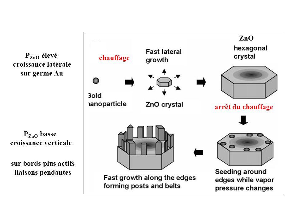 ZnO chauffage arrêt du chauffage P ZnO élevé croissance latérale sur germe Au P ZnO basse croissance verticale sur bords plus actifs liaisons pendante
