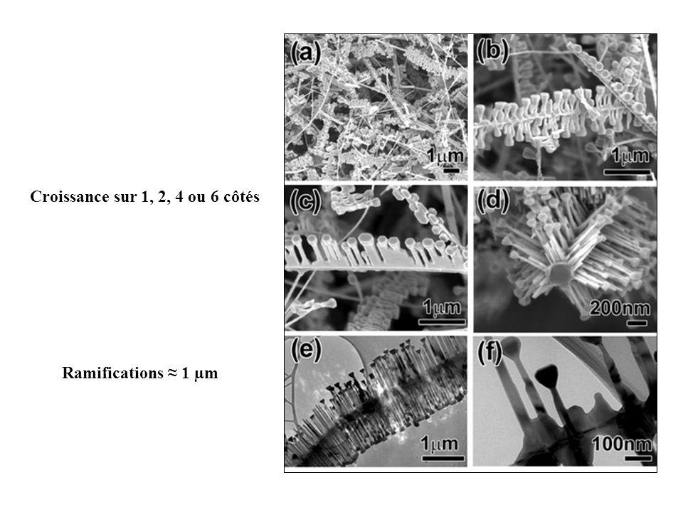 Croissance sur 1, 2, 4 ou 6 côtés Ramifications 1 µm