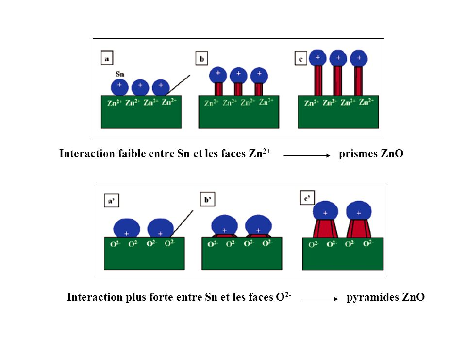 Interaction faible entre Sn et les faces Zn 2+ prismes ZnO Interaction plus forte entre Sn et les faces O 2- pyramides ZnO