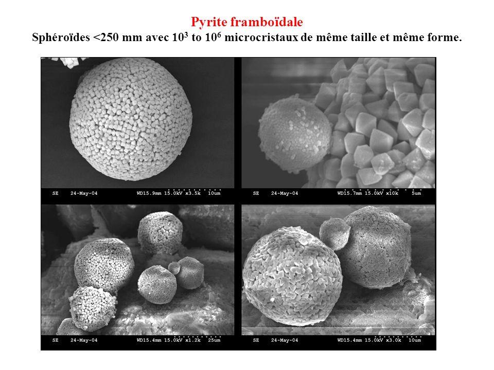 Pyrite framboïdale Sphéroïdes <250 mm avec 10 3 to 10 6 microcristaux de même taille et même forme.