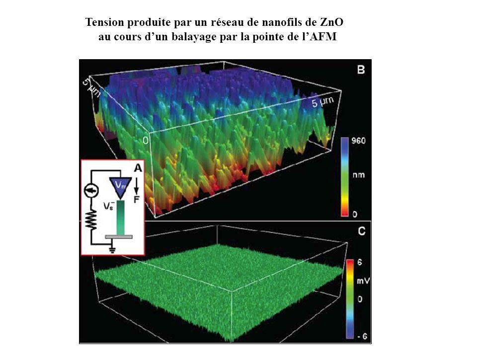 Tension produite par un réseau de nanofils de ZnO au cours dun balayage par la pointe de lAFM