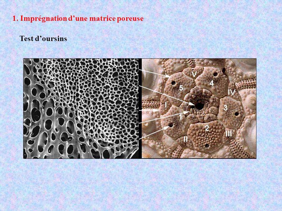 Test d oursin Structure poreuse bicontinu pores et murs ont le même volume et la même morphologie mais ne se croisent jamais les pores forment un réseau hexagonal 2D H.A.