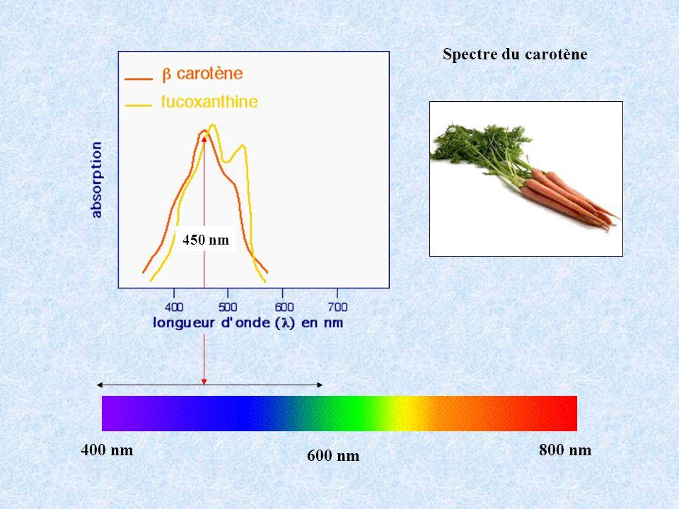 Spectre du carotène400 nm800 nm 600 nm 450 nm