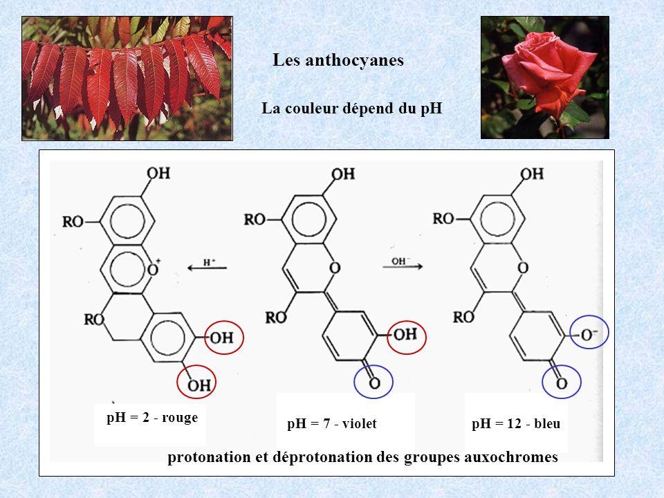 La couleur dépend du pH Les anthocyanes pH = 2 - rouge pH = 7 - violetpH = 12 - bleu protonation et déprotonation des groupes auxochromes