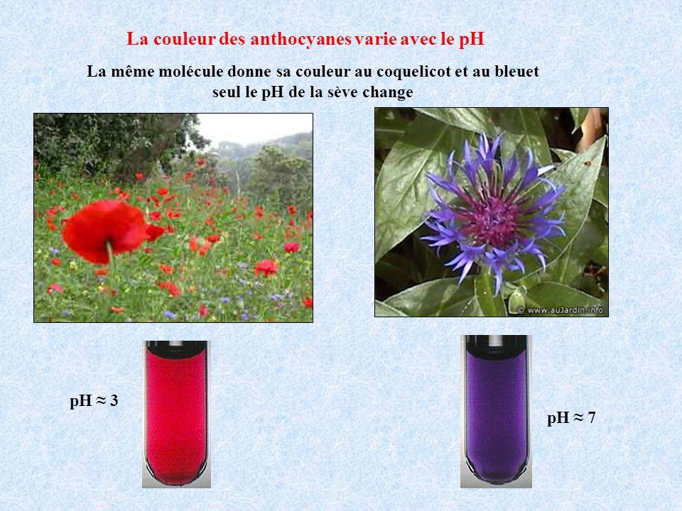 La couleur des anthocyanes varie avec le pH La même molécule donne sa couleur au coquelicot et au bleuet seul le pH de la sève change pH 3 pH 7