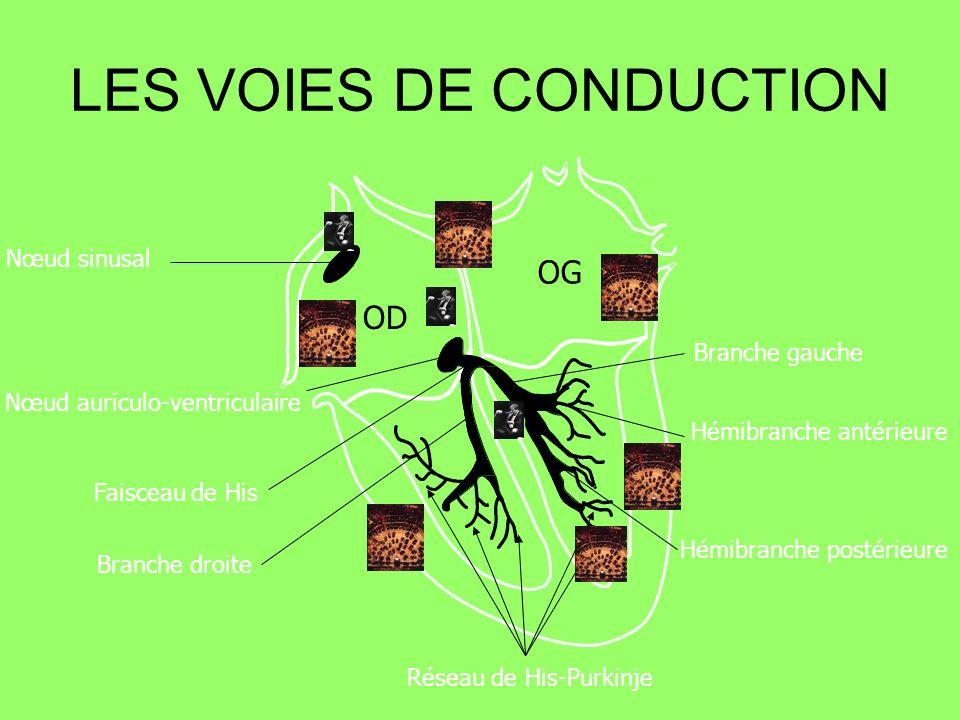 Nœud sinusal Nœud auriculo-ventriculaire Faisceau de His Branche droite Branche gauche Hémibranche antérieure Hémibranche postérieure Réseau de His-Pu