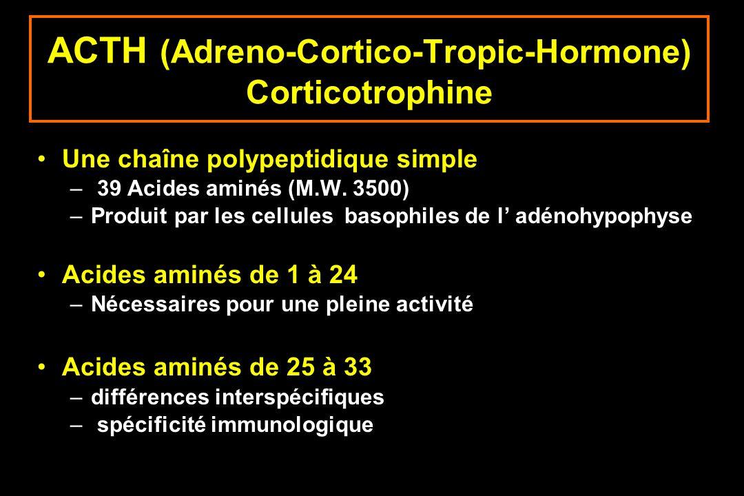 ACTH (Adreno-Cortico-Tropic-Hormone) Corticotrophine Une chaîne polypeptidique simple – 39 Acides aminés (M.W. 3500) –Produit par les cellules basophi