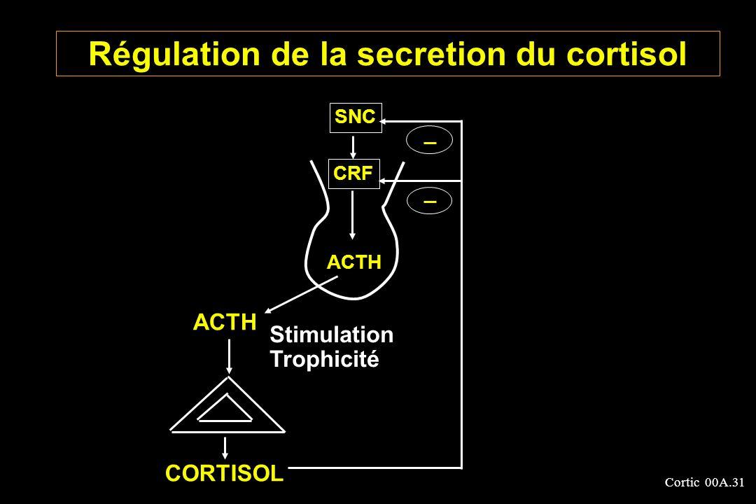 Cortic 00A.31 Régulation de la secretion du cortisol ACTH SNC CRF ACTH Stimulation Trophicité CORTISOL