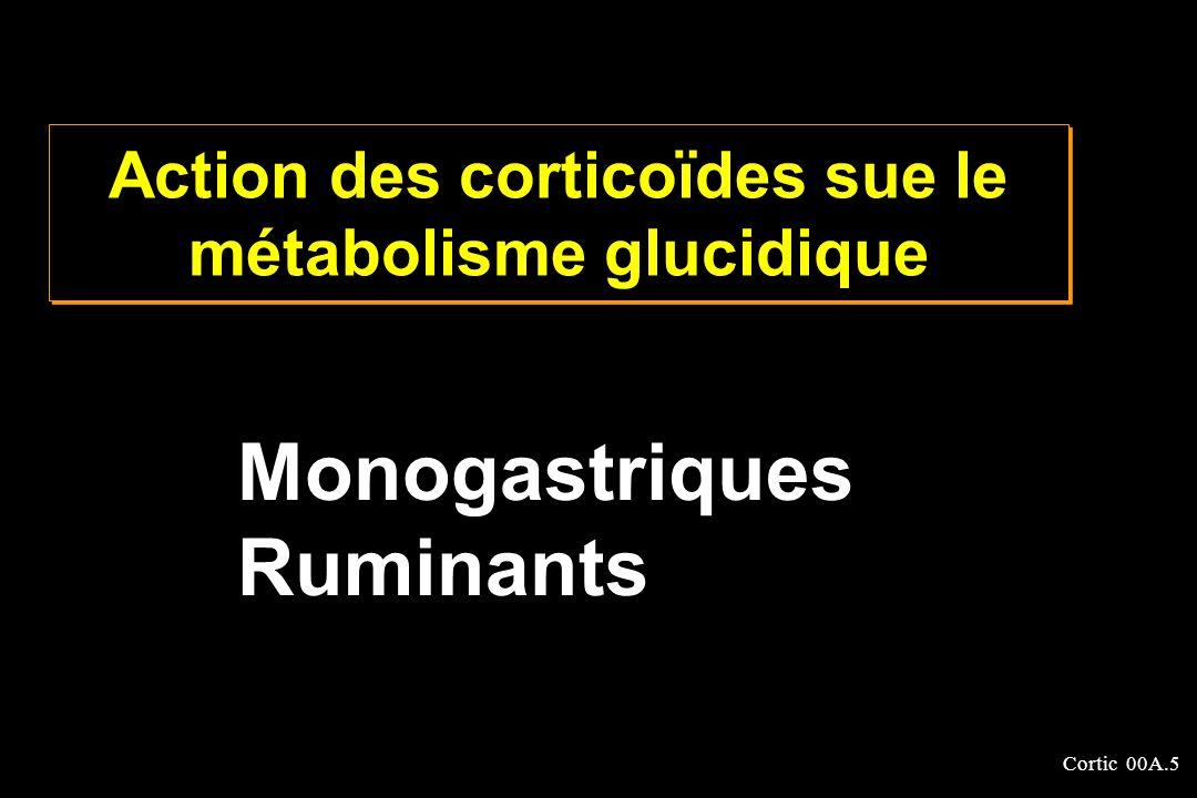 Cortic 00A.5 Action des corticoïdes sue le métabolisme glucidique Monogastriques Ruminants