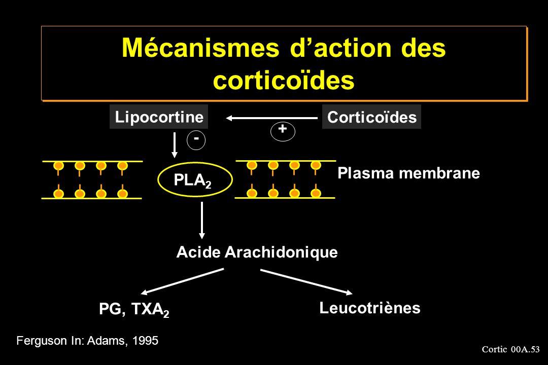 Cortic 00A.53 Mécanismes daction des corticoïdes Lipocortine Corticoïdes PLA 2 Plasma membrane Acide Arachidonique PG, TXA 2 Leucotriènes + - Ferguson