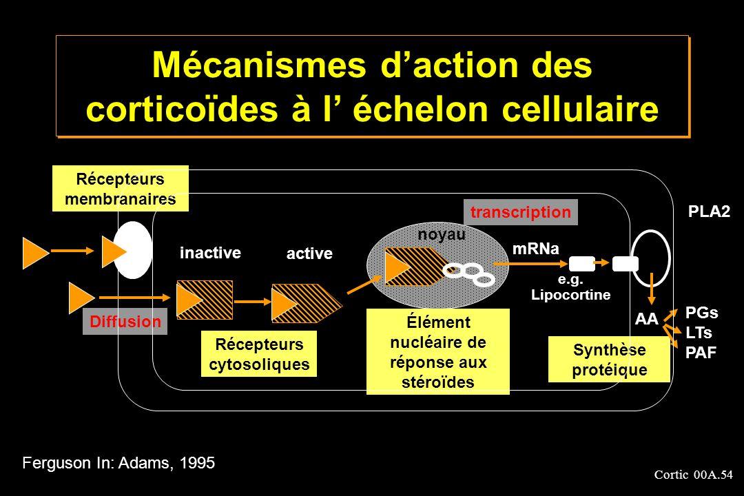 Cortic 00A.54 Mécanismes daction des corticoïdes à l échelon cellulaire Récepteurs membranaires Récepteurs cytosoliques Élément nucléaire de réponse a