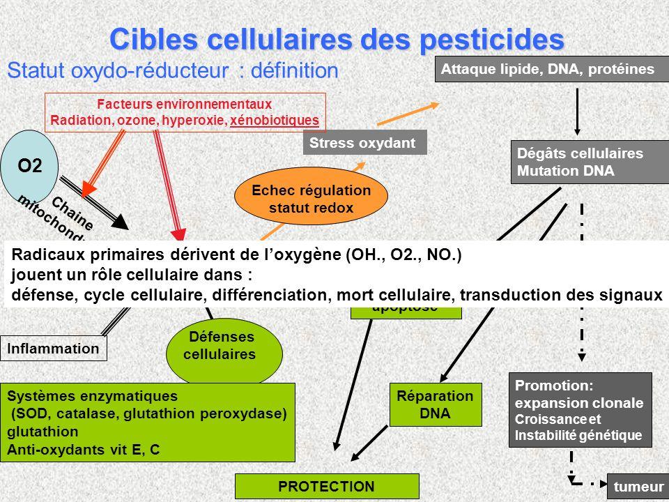 Statut oxydo-réducteur : définition ROS espèces oxygénées réactives Echec régulation statut redox Stress oxydant Attaque lipide, DNA, protéines O2 Chaine mitochondriale Inflammation Défenses cellulaires PROTECTION Initiation Promotion: expansion clonale Croissance et Instabilité génétique tumeur Dégâts cellulaires Mutation DNA apoptose Réparation DNA Systèmes enzymatiques (SOD, catalase, glutathion peroxydase) glutathion Anti-oxydants vit E, C cytoP450 Facteurs environnementaux Radiation, ozone, hyperoxie, xénobiotiques Radicaux primaires dérivent de loxygène (OH., O2., NO.) jouent un rôle cellulaire dans : défense, cycle cellulaire, différenciation, mort cellulaire, transduction des signaux Cibles cellulaires des pesticides
