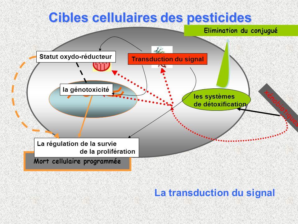 Elimination du conjugué les systèmes de détoxification xénobiotiques Mort cellulaire programmée Transduction du signal Statut oxydo-réducteur la génot
