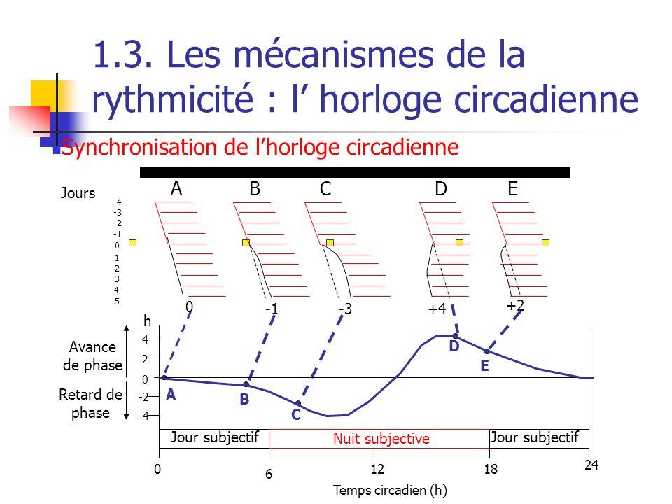 1.3. Les mécanismes de la rythmicité : l horloge circadienne -3+4 +2 AB C D E Temps circadien (h) 0 6 1218 24 0 2 4 -4 -2 Jour subjectif Nuit subjecti