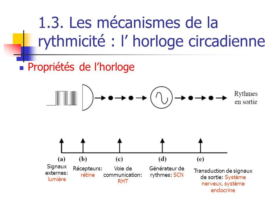 1.3. Les mécanismes de la rythmicité : l horloge circadienne Signaux externes: lumière Récepteurs: rétine Voie de communication: RHT Générateur de ryt