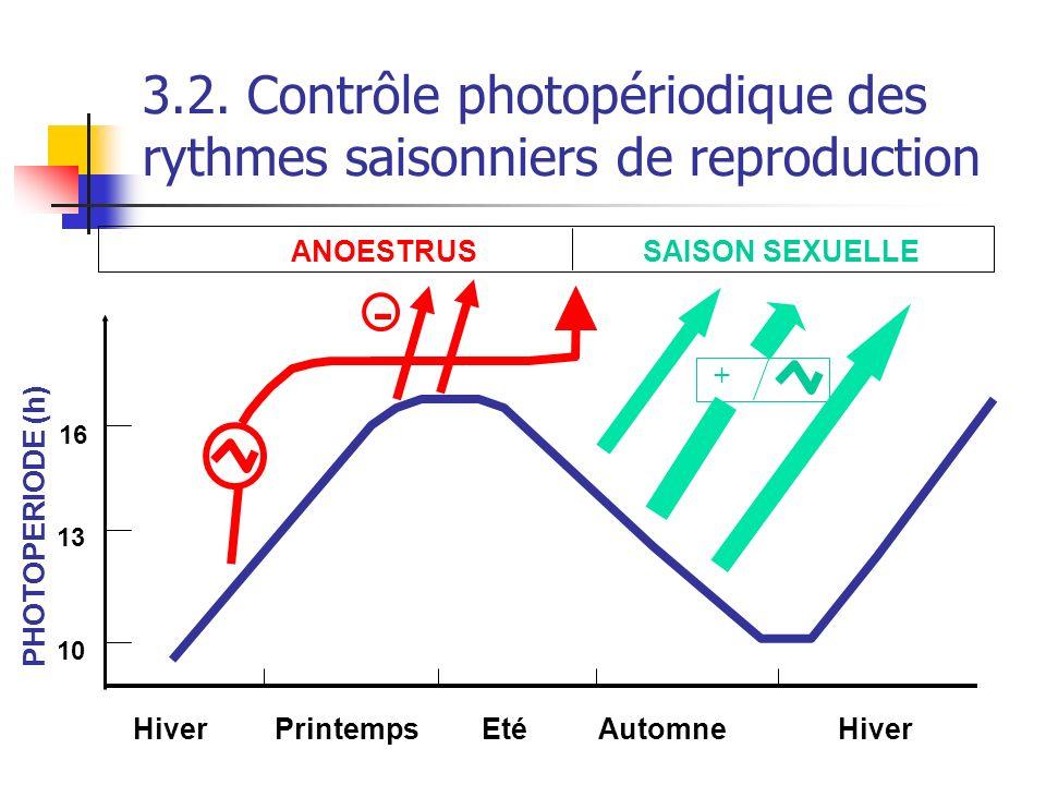 3.2. Contrôle photopériodique des rythmes saisonniers de reproduction SAISON SEXUELLE ANOESTRUS PrintempsHiverEtéAutomneHiver PHOTOPERIODE (h) 10 13 1