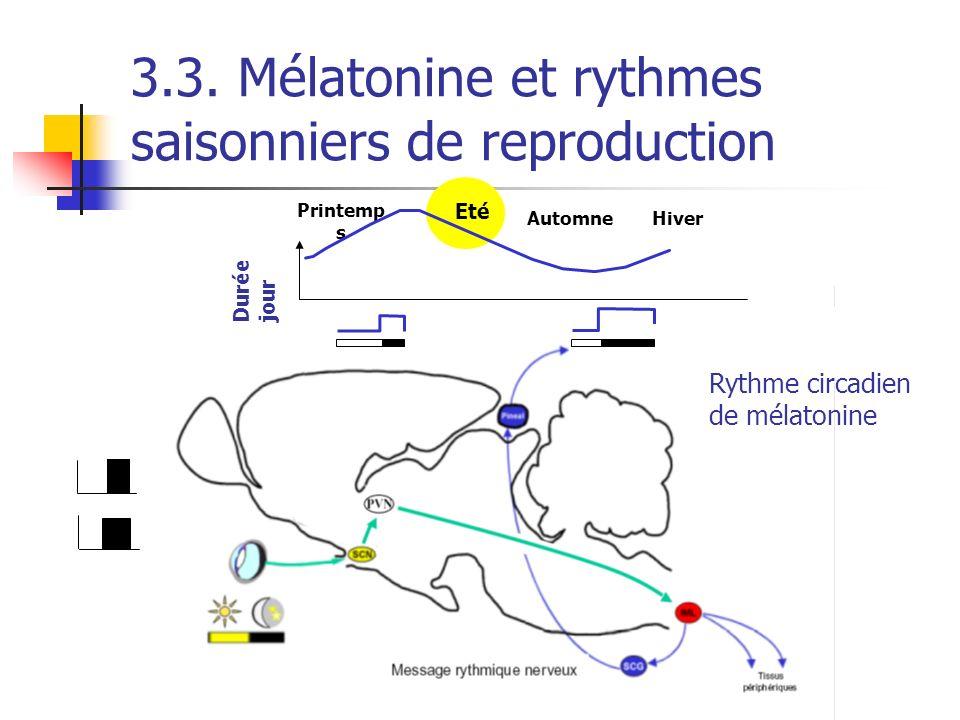 3.3. Mélatonine et rythmes saisonniers de reproduction Rythme circadien de mélatonine Hiver Printemp s Automne Durée jour Eté