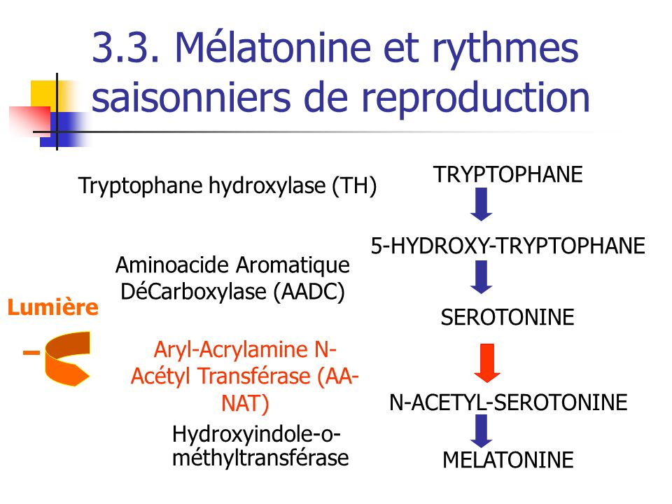 3.3. Mélatonine et rythmes saisonniers de reproduction TRYPTOPHANE 5-HYDROXY-TRYPTOPHANE SEROTONINE N-ACETYL-SEROTONINE MELATONINE Tryptophane hydroxy